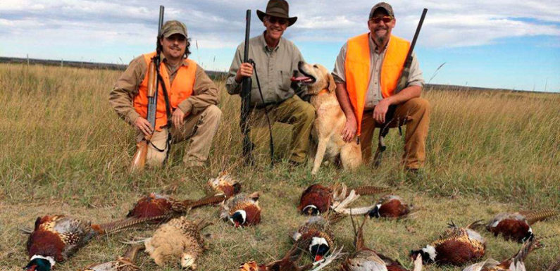 Quail Hunt: Heflin, Alabama